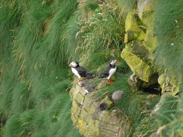 seabirds-1.jpg