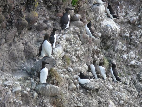 seabirds-2.jpg