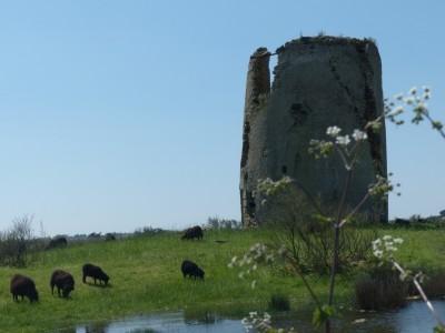 le moulin Gueffard