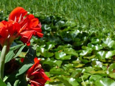 face aux jardins andalous