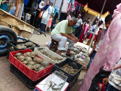 des tortues (?? animaux de compagnie, future soupe ??)