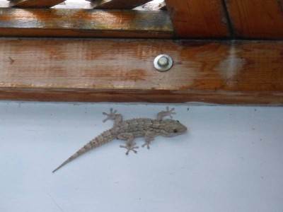 l'ami de la terrasse !