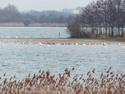 oiseaux migrateurs pour Jean des Landes