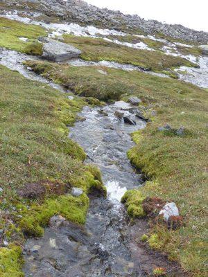 petits ruisseaux descendant vers le fjord