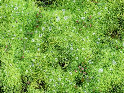 gouttes d'eau prisonnières des lichens