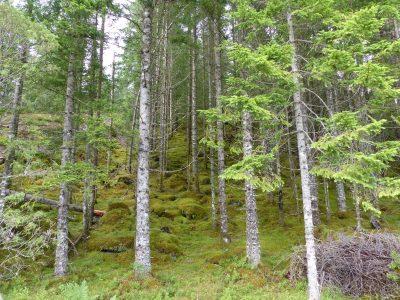 la ballade ds les bois environnants